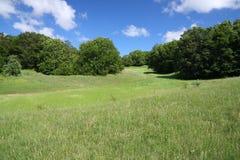 zieleni łąkowi drzewa Zdjęcie Royalty Free