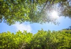 Zieleni świezi drzewo liście przeciw niebieskiemu niebu Zdjęcia Stock