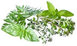 Zieleni świezi ziele na bielu obrazy stock