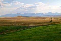 Zieleni & żółci traw pola Obraz Stock