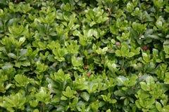 zieleni fotografia stock