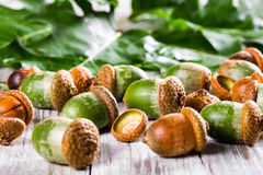 Zieleni acorns na drewnianym stole Zdjęcie Royalty Free