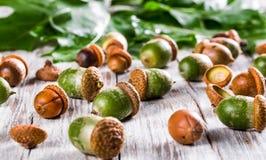 Zieleni acorns na drewnianym stole Zdjęcia Royalty Free