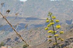 Zieleni agawa kwiaty Obraz Stock