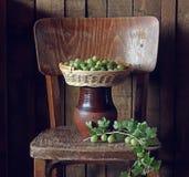 Zieleni agresty w koszu na krześle Fotografia Royalty Free