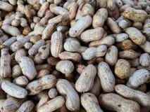 zieleni arachidy Obraz Royalty Free