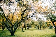 Zieleni autamn drzewa w parku w Październiku Rocznika kolor prętowej wizerunku damy retro dymienia styl Fotografia Stock