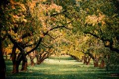 Zieleni autamn drzewa w parku w Październiku Rocznika kolor prętowej wizerunku damy retro dymienia styl Fotografia Royalty Free