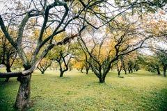 Zieleni autamn drzewa w parku w Październiku Rocznika kolor prętowej wizerunku damy retro dymienia styl Zdjęcie Stock