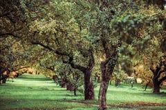 Zieleni autamn drzewa w parku w Październiku Rocznika kolor prętowej wizerunku damy retro dymienia styl Obrazy Stock