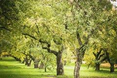 Zieleni autamn drzewa w parku w Październiku Rocznika kolor prętowej wizerunku damy retro dymienia styl Obraz Stock