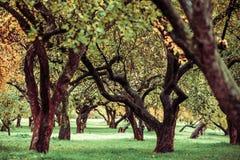 Zieleni autamn drzewa w parku w Październiku Rocznika kolor prętowej wizerunku damy retro dymienia styl Zdjęcia Stock