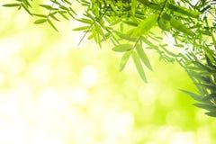 Zieleni bambusów liście z tłem lub Zielenieje energię Fotografia Stock