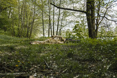 Zieleni berety snajperscy Fotografia Royalty Free