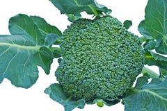 Zieleni brokuły Zdjęcie Royalty Free