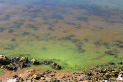 Zieleni brudna woda obrazy stock