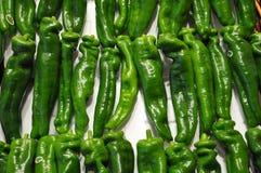 zieleni chili pieprze Zdjęcia Stock