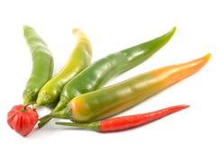 Zieleni chili pieprze i scotch czapeczka zdjęcie stock