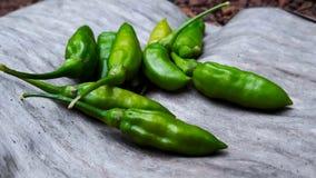 Zieleni chillies Obraz Stock