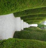 zieleni cmentarzy drzewa Zdjęcia Royalty Free