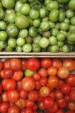 zieleni czerwoni pomidory Zdjęcie Royalty Free