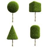 Zieleni dekoracyjni krzaki lub drzewa Obraz Royalty Free