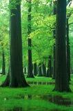 zieleni drewna Zdjęcie Royalty Free