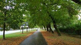 zieleni drzewa i bruk ścieżka między one obraz stock