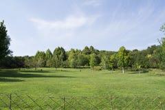 Zieleni drzewa i trawa Obraz Stock