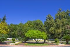 Zieleni drzewa, krajobrazowy projekt w Ataturk parku - Antalya, Turcja Zdjęcie Stock