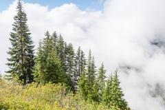 Zieleni drzewa na górze w chmurach Obrazy Royalty Free