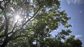 Zieleni drzewa Timelapse