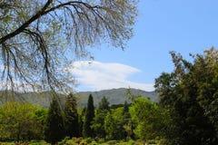 Zieleni drzewa w niebieskim niebie Obrazy Royalty Free