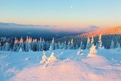 Zieleni drzewa zakrywający z płatkami śniegu Obraz Royalty Free