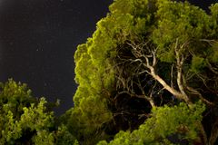 zieleni drzewa zgłębiają w górę widoku z nocnym niebem i gwiazdami dalej obrazy royalty free