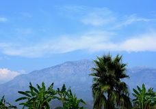 zieleni drzewka palmowe Obrazy Royalty Free