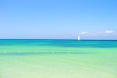 Zieleni drzewka palmowe na piaskowatej plaży linii brzegowej blisko oceanu Zdjęcia Stock