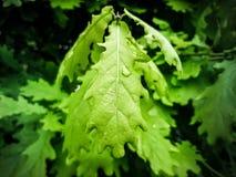 Zieleni drzewo liście w makro- obraz stock