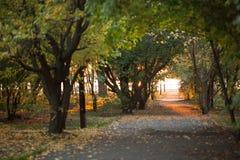 Zieleni duzi drzewa w zadziwiającym parku pojęcia odosobniony natury biel Zdjęcia Royalty Free