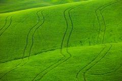 Zieleni faliści pola w Tuscany zdjęcie royalty free