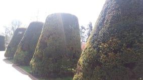Zieleni filiżanki od drzewa Fotografia Royalty Free