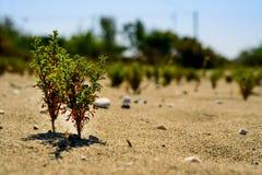 Zieleni flance młodzi drzewa pod piekącym słońcem w piasku pojęcie trwałość, przyrost, siła woli, ekologia obrazy stock