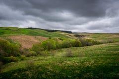 Zieleni górkowaci pola w Szkocja, Europa Zdjęcie Royalty Free