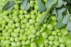 zieleni grochy Obrazy Stock