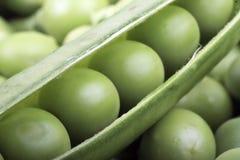 zieleni grochy Fotografia Royalty Free