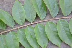 zieleni gwiazdowi agrestów liście Zdjęcie Stock