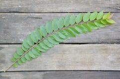 zieleni gwiazdowi agrestów liście Obrazy Stock