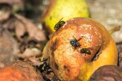 Zieleni i błękita komarnicy siedzi na przegniłe bonkrety drzewo pola Zdjęcia Stock
