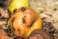 Zieleni i błękita komarnicy siedzi na przegniłe bonkrety drzewo pola Obrazy Royalty Free