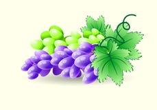 Zieleni i błękitni winogrona na gałąź wektor Obrazy Royalty Free